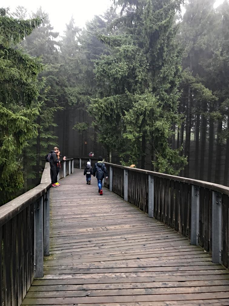 Baumwipfel-bayerischer-Wald