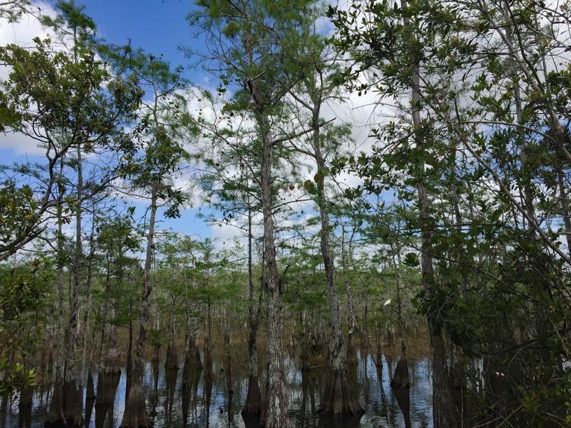 Everglades-Loop-mit-Kindern