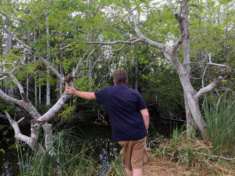 Strandfamilie-Everglades mit Kindern