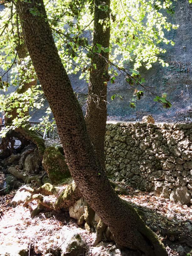 Schmetterlingstal-Petaloudes-Rhodos-