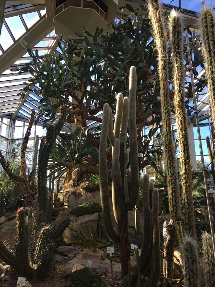 Ausflugsziele Frankfurt Palmengarten