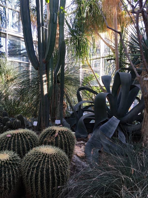 Palmengarten-Frankfurt-Kaktus-Schwiegermuttersitz