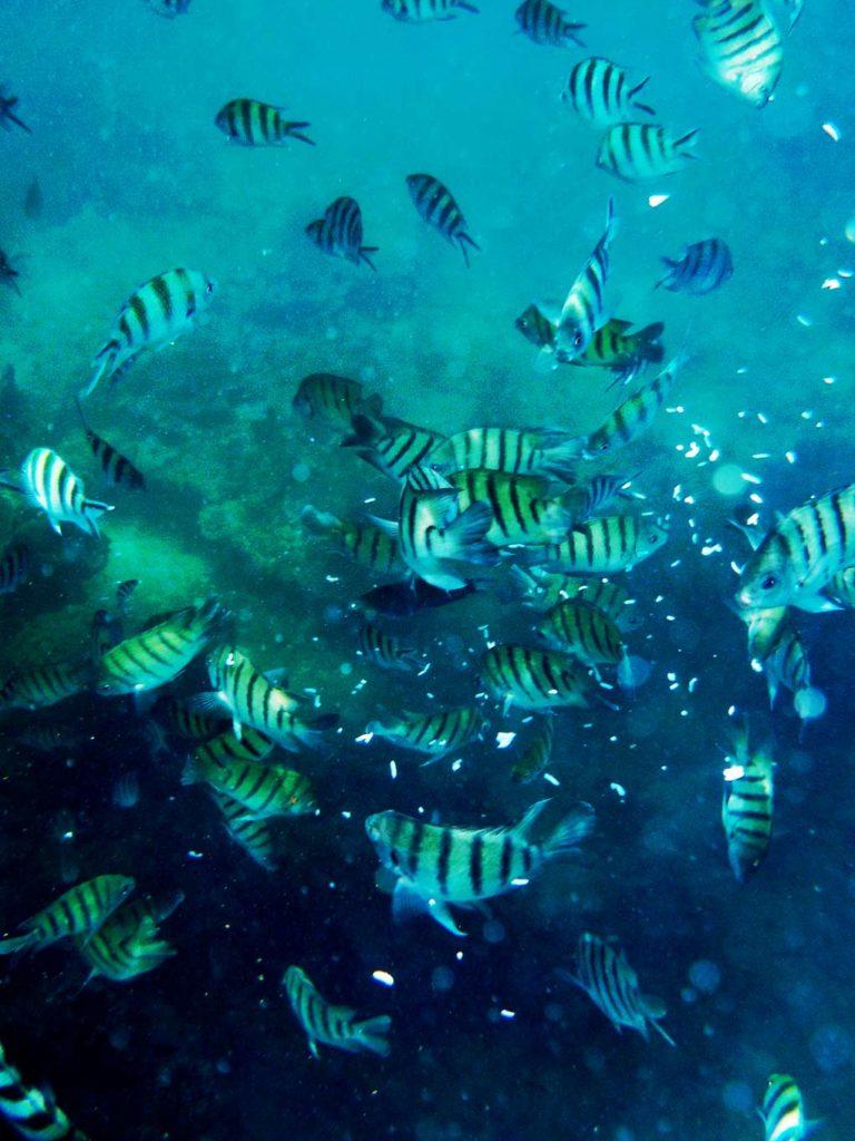 schnorcheln_mit_kindern_thailand_unterwasserwelt