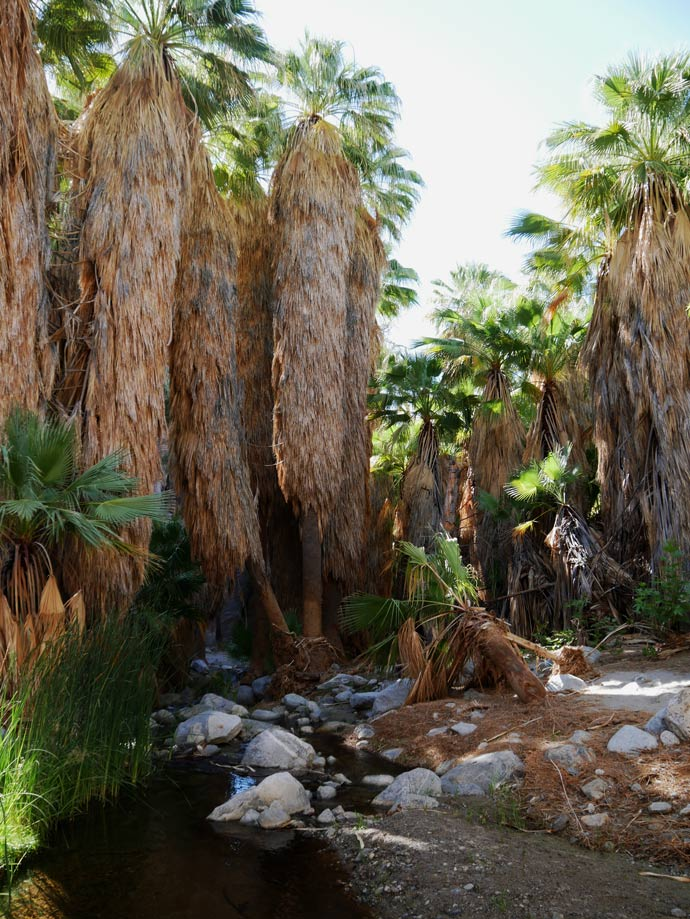 andreas-canyon-mit-kindern-indian-canyons-palm-springs-mit-kindern
