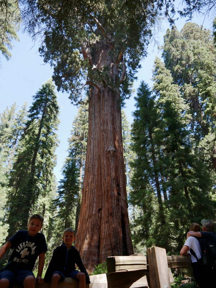 general-sherman-tree-groesster-baum-sequoia-nationalpark-mit-kindern