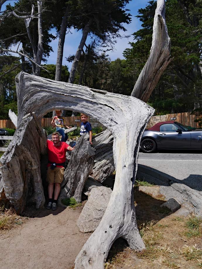 ghost trees 17 mile drive highway 1 mit kindern