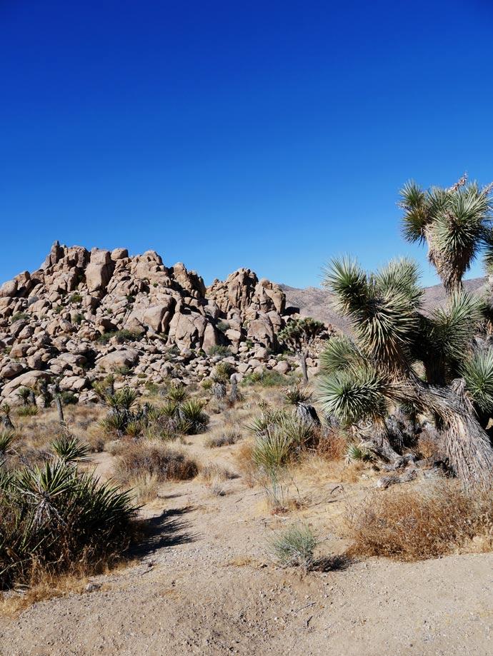 joshua-tree-wueste-kalifornien-palm-springs-mit-kindern