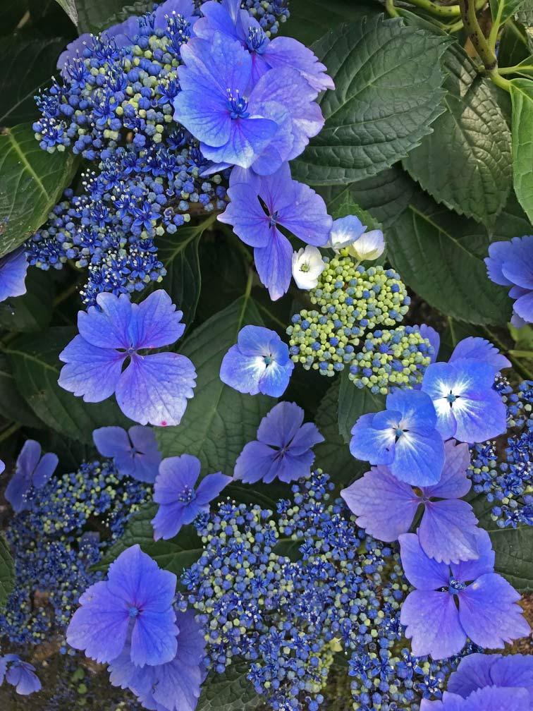 lost gardens of heligan cornwall mit kindern