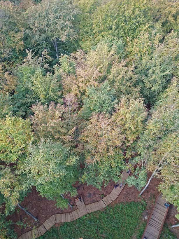 aussichtsturm-treetop-waldturm-ronnede-daenamark-mit-kindern