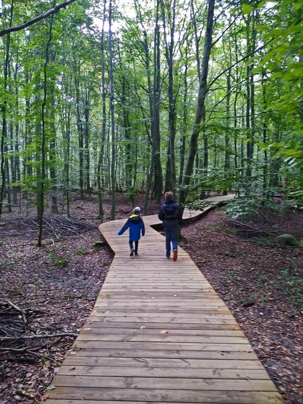 waldweg-camp-adventure-ausflugsziele-daenemark-mit-kindern