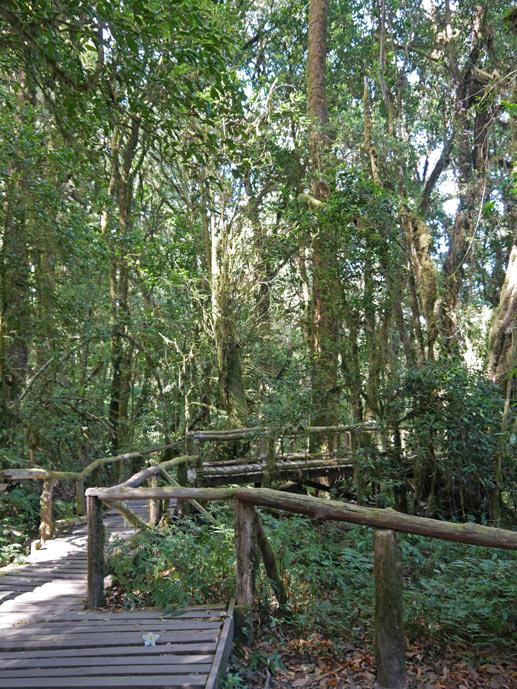 ang ka luang nature trail doi inthanon chiang mai mit kindern
