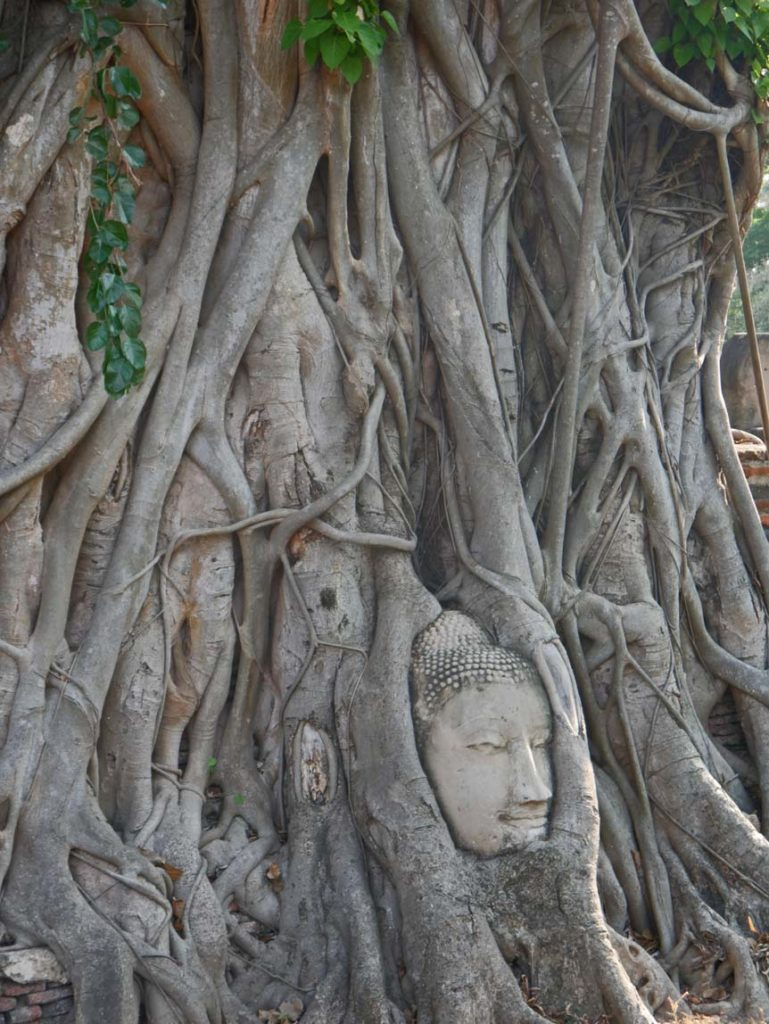 buddha-kopf-baum-ayutthaya-mit-kindern