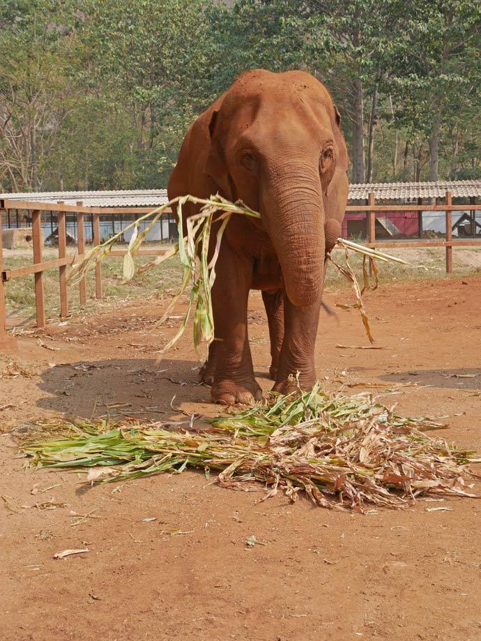 elephant-nature-camp-thailand-chiang-mai-mit-kindern