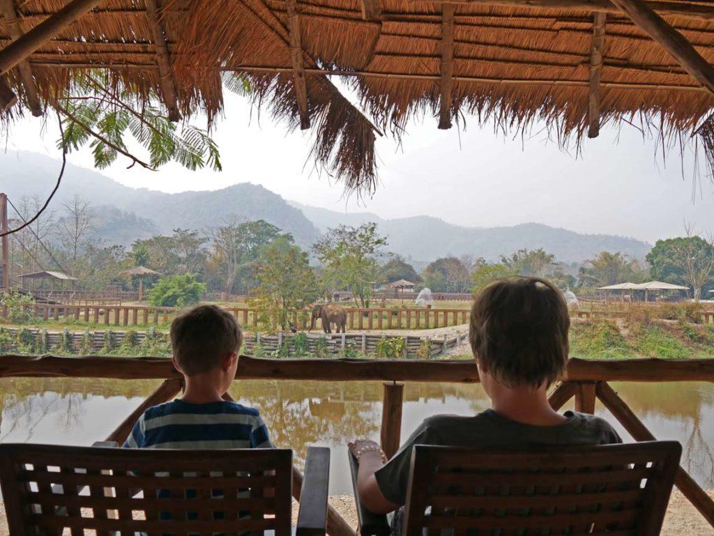 elefanten-beobachten-thailand-chiang-mai-mit-kindern