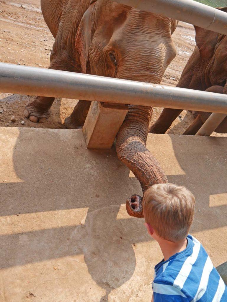 elefanten fuettern elefant nature park chiang mai mit kindern