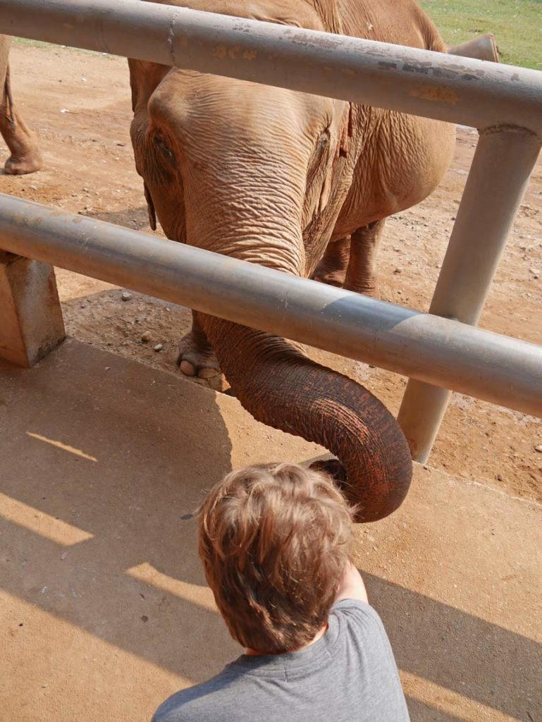 elephant-nature-park-chiang-mai-mit-kindern