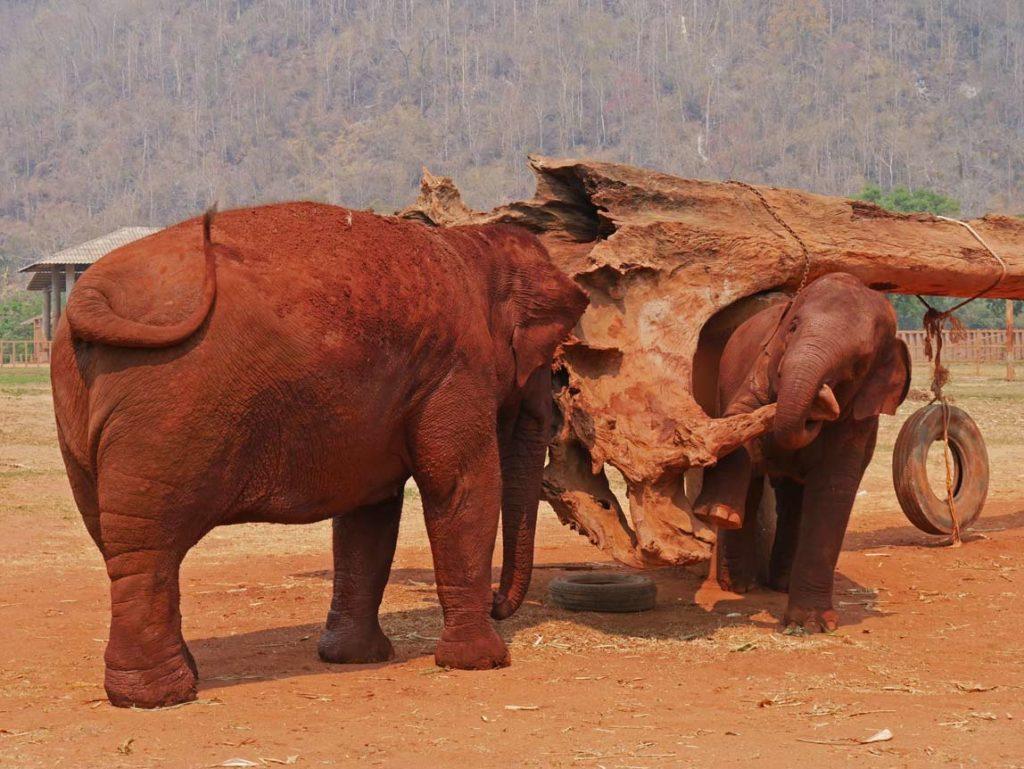 spielender-baby-elefant-chiang-mai-mit-kindern