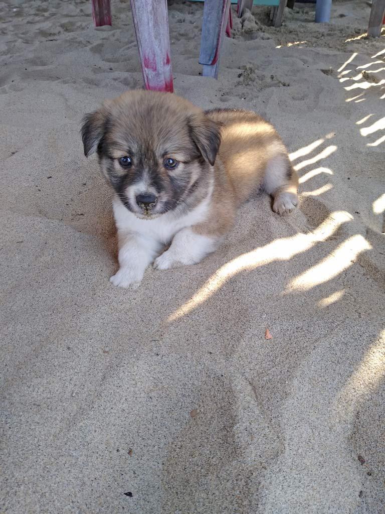 strandhund-hoi-an-mit-kindern