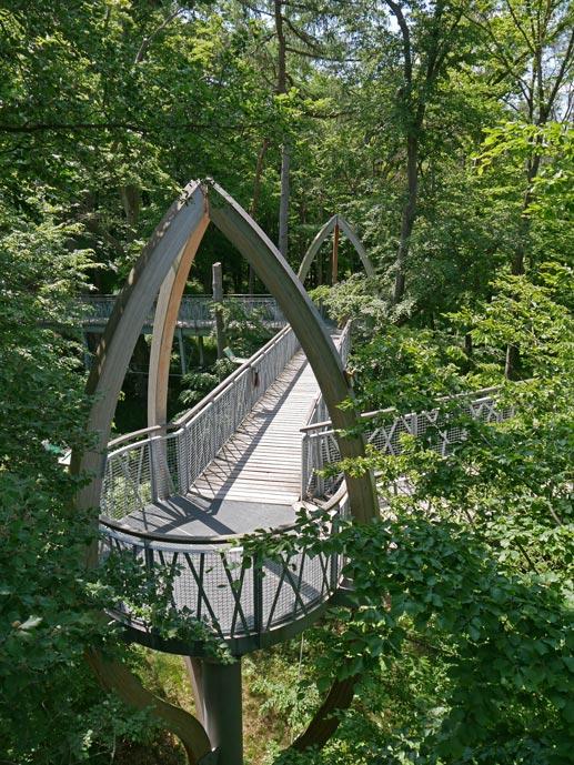 tree-top-walk-baumwipfelpfad-edersee-mit-kindern