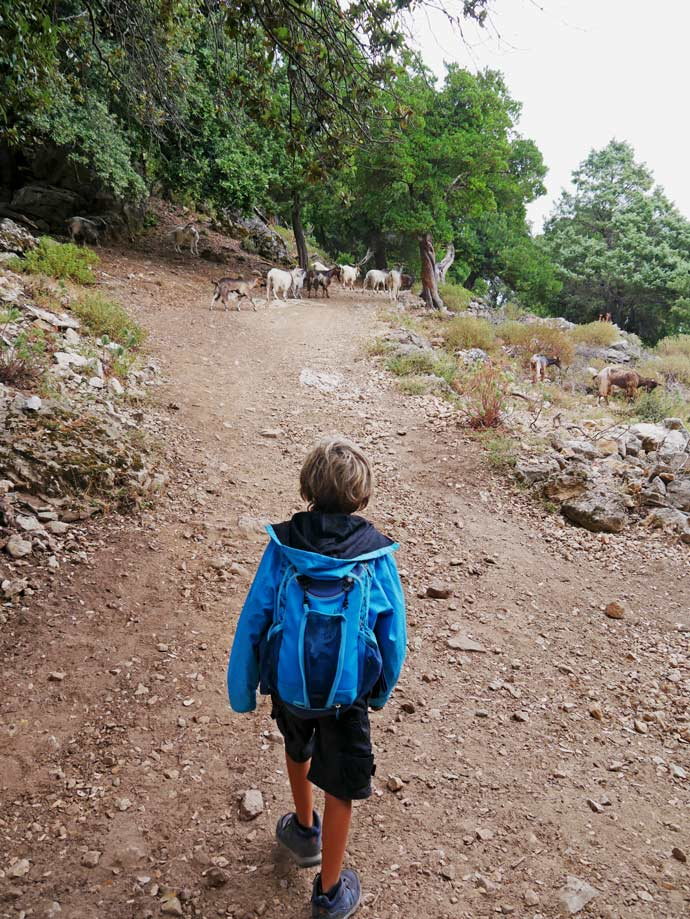 gola gorropu wanderung canyon sardinien mit kindern