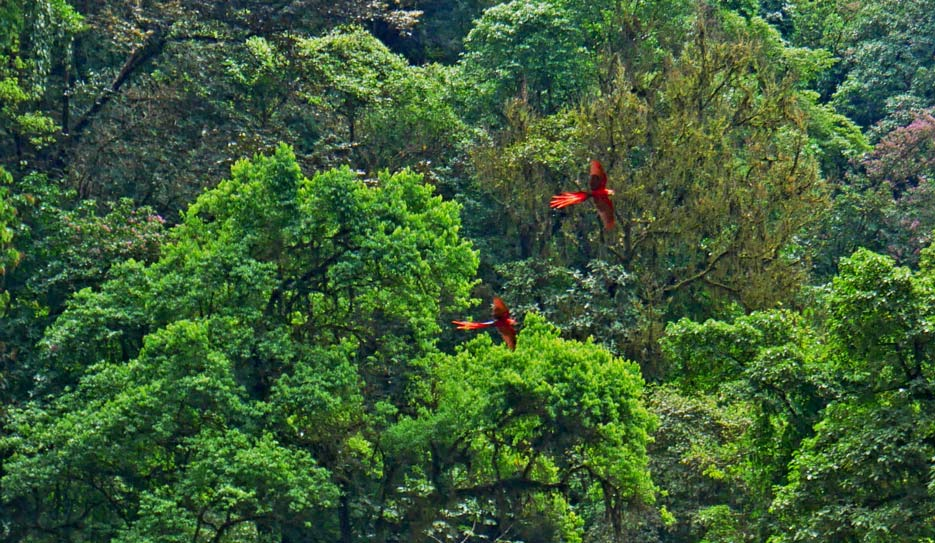 aras-costa-rica-reise-tipps