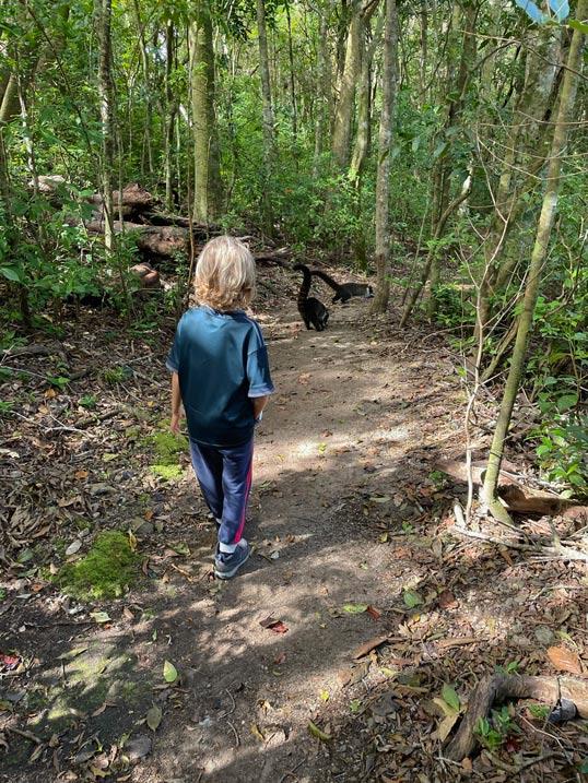 bosque-de-los-ninos-costa-rica-reise