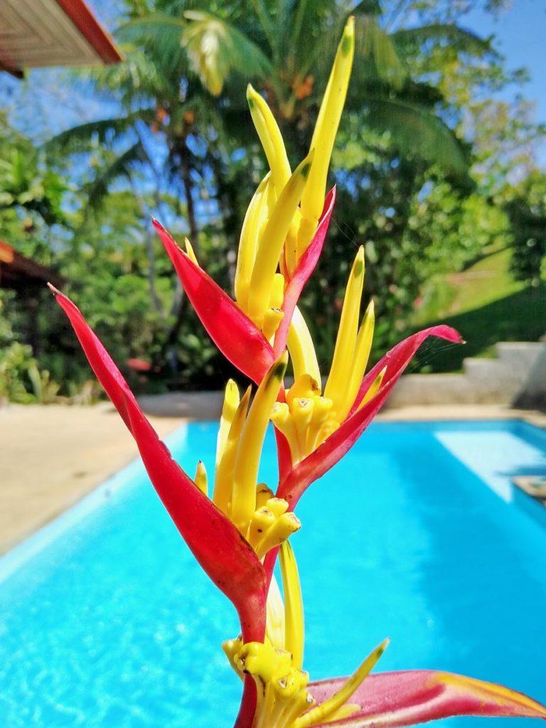 helikonie-pflanzen.-costa-rica-tipps