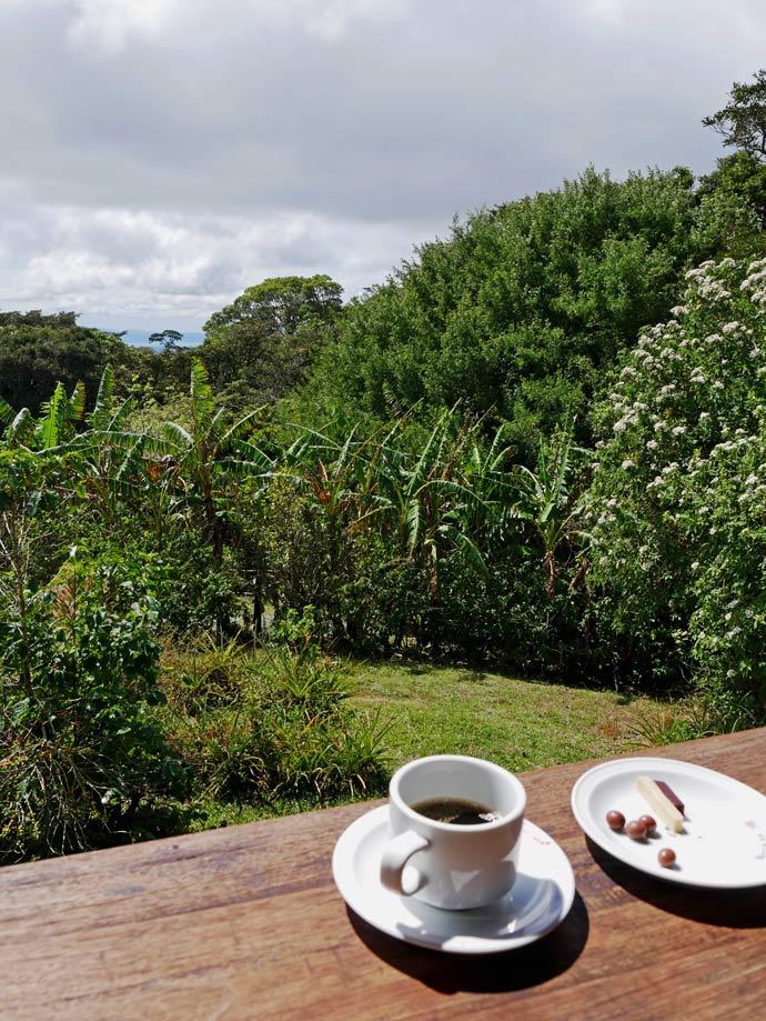 kaffeetour-don-juan-mit-kindern-monteverde-costa-rica