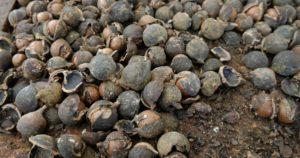 Kakaofarm in Costa Rica – Urlaub mal etwas anders