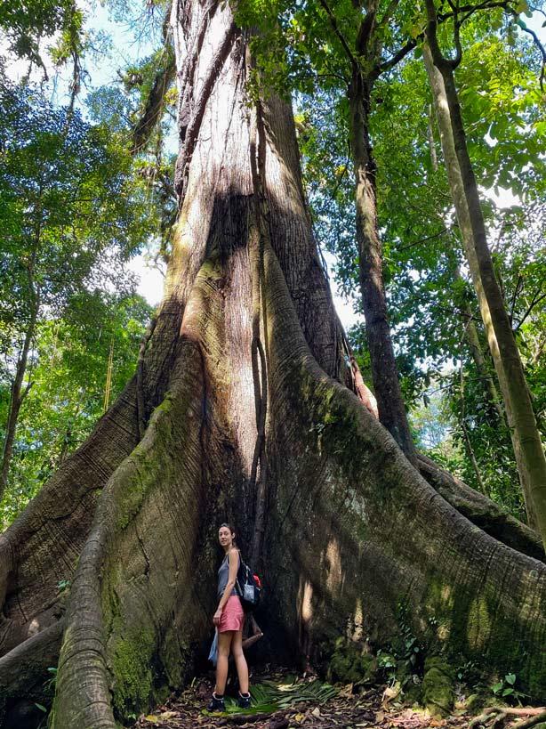 kapokbaum-ceiba-tree-nationalpark-vulkan-arenal-mit-kindern