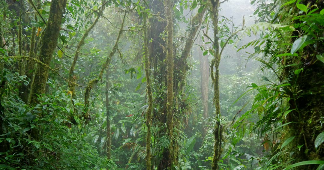 You are currently viewing Nebelwald Monteverde – feuchte Lehrstunde in der Natur