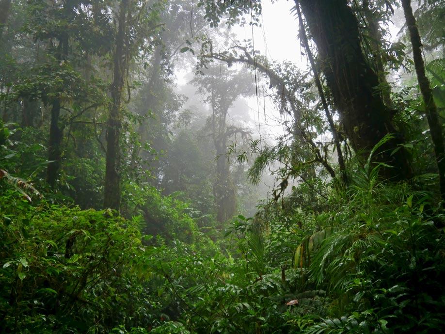 tipps-costa-rica-monteverde-rundreise-costa-rica