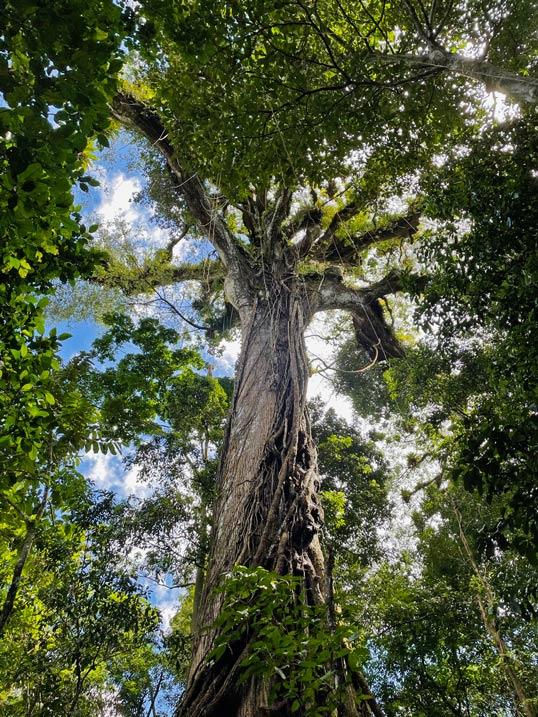nationalpark arenal kapokbaum costa rica mit kindern