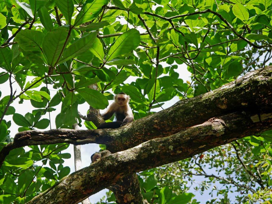 cahuita-nationalpark-mit-kindern-tipps-costa