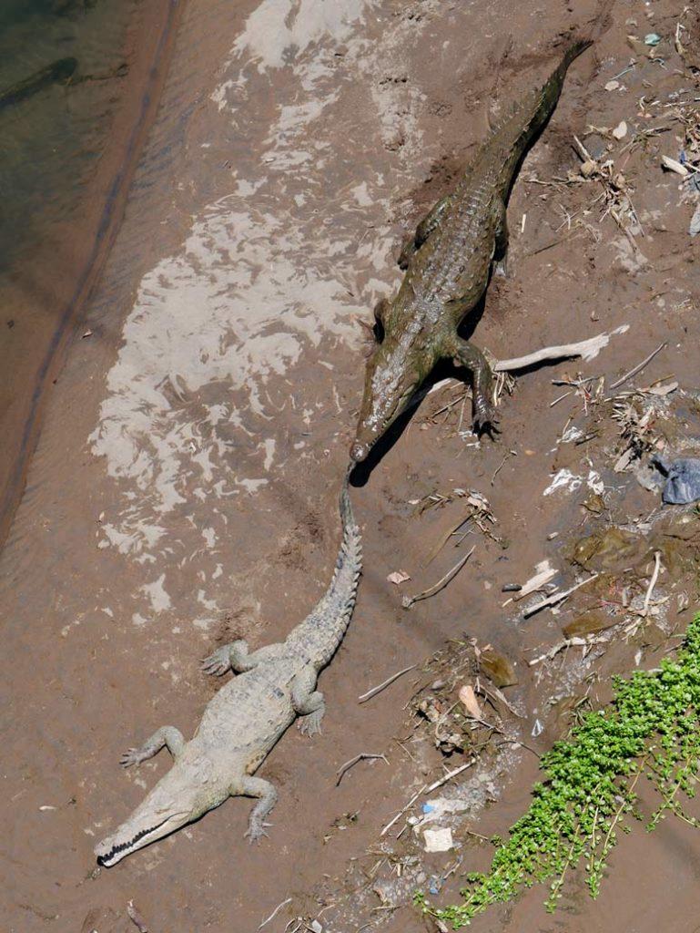 krokodilbruecke-costa-rica-pazifikkueste-mit-kindern