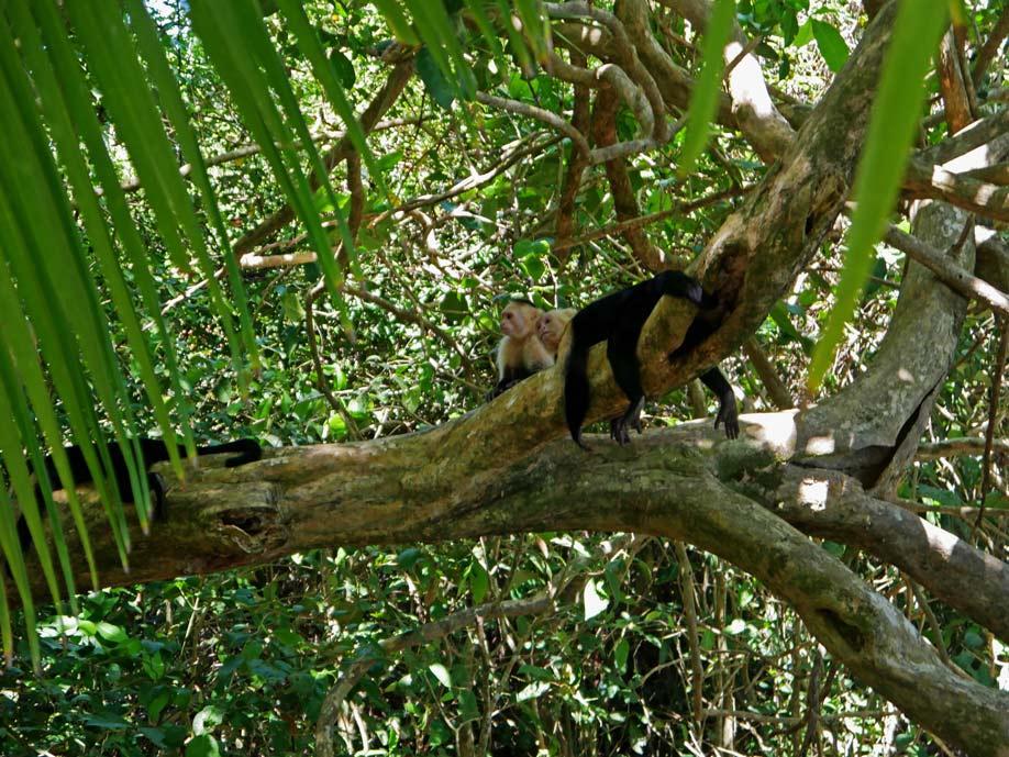 manuel antonio nationalpark mit kindern