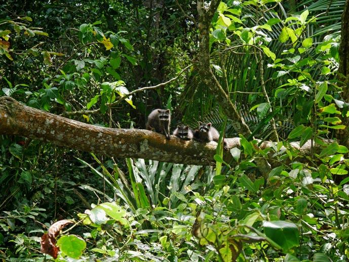 tipps-costa-rica-nationalpark-cahuita-mit-kindern
