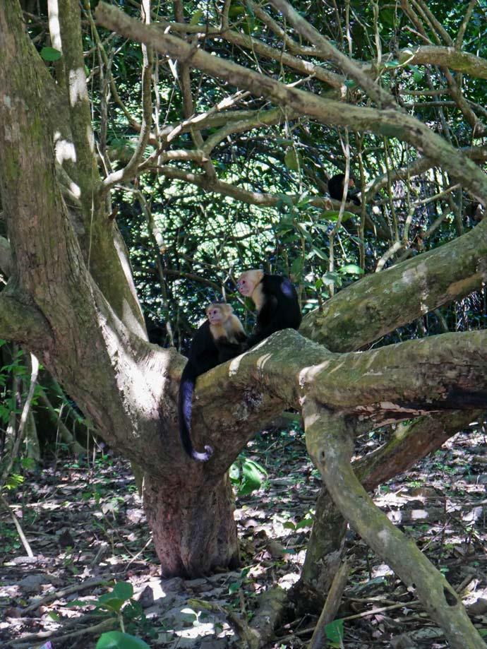 tierbeobachtung-manuel-antonio-nationalpark-costa-rica-mit-kind