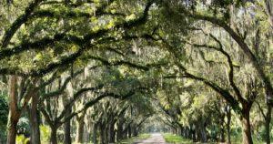 Read more about the article Sehenswürdigkeiten in Savannah – Tipps für einen kostengünstigen Besuch