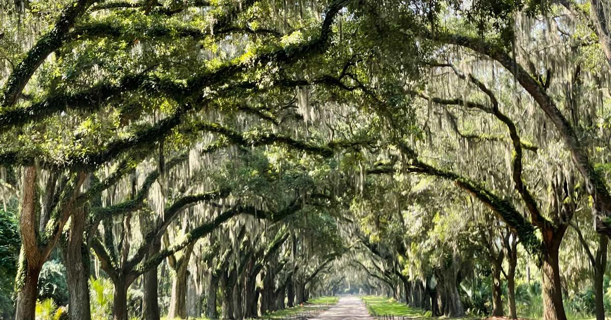 You are currently viewing Sehenswürdigkeiten in Savannah – Tipps für einen kostengünstigen Besuch